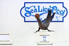 Demostración del león marino Fotos de archivo libres de regalías
