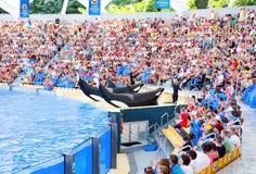 Demostración del océano de la orca Foto de archivo