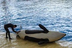 Demostración del océano de la orca en el parque de Loro, Puerto de la Cruz imagen de archivo libre de regalías