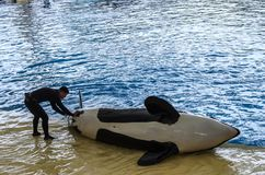 Demostración del océano de la orca en el parque de Loro, Puerto de la Cruz, Tenerife, Cana fotografía de archivo libre de regalías