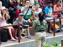 Demostración del pájaro de Jurong Fotos de archivo libres de regalías
