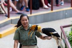 Demostración del pájaro de Jurong Foto de archivo libre de regalías