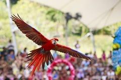 Demostración del pájaro en el parque del pájaro de Jurong, Singapur Imagen de archivo
