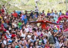 Demostración del pájaro en el parque del pájaro de Jurong, Singapur Fotografía de archivo