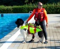 Demostración del rescate con los perros del salvavidas Fotos de archivo