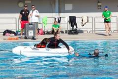 Demostración del rescate con los perros del salvavidas Fotografía de archivo