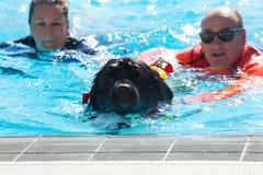 Demostración del rescate con los perros del salvavidas Foto de archivo libre de regalías