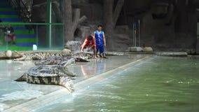 Demostración diaria del cocodrilo en silla en Sriracha Tiger Zoo, Tailandia metrajes