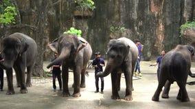 Demostración diaria del elefante en Sriracha Tiger Zoo, Tailandia almacen de metraje de vídeo