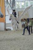 Demostración internacional del caballo de las alas del blanco Jinete femenino en un caballo blanco pegasus Imágenes de archivo libres de regalías