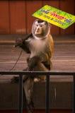 Demostración linda del mono en el parque zoológico de Phuket Foto de archivo libre de regalías