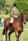 Demostración real del caballo de Windsor Fotografía de archivo