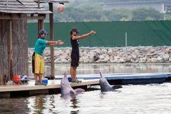 Demostración rosada del delfín en la isla de Sentosa, Singapur imágenes de archivo libres de regalías