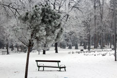 Demostración y árbol Foto de archivo libre de regalías