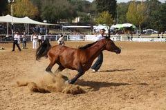 Demostración y campeonato árabes del caballo Foto de archivo
