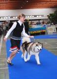 Demostración canina internacional Imagen de archivo libre de regalías