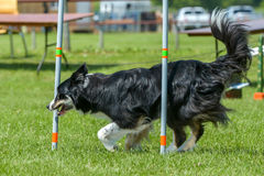 Demostración de perros Fotos de archivo libres de regalías