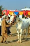 Demostración del caballo Foto de archivo