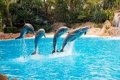 Demostración del delfín en el Loro Parque, que ahora es atracción del ` s de Tenerife segundo mayor con la piscina más grande del Fotografía de archivo