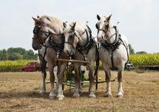 Demostraciones agrícolas traídas por caballo imagen de archivo libre de regalías