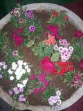 Demostraciones de flores hermosas fotografía de archivo libre de regalías