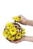 Demostraciones del florista cómo hacer la composición floral Imagen de archivo