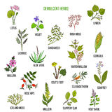 Demulcent herbs. Hand drawn set Stock Image