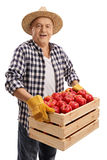 Den äldre bonden som rymmer en spjällåda, fyllde med äpplen fotografering för bildbyråer