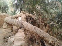 Den äldsta palmträdet i staden av Ghadames arkivbild