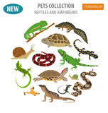 Den älsklings- lägenheten för reptil- och amfibiesymbolsuppsättningen utformar på whit stock illustrationer