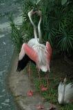 Den älskvärda flamingo arkivfoto