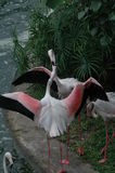 Den älskvärda flamingo royaltyfri foto