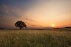 Den älskvärda graslandsolnedgången med trädet och ljusa färger fördunklar royaltyfria foton
