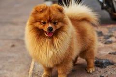 Den älskvärda hunden royaltyfria foton