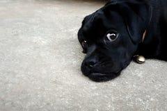 Den älskvärda svarta valphunden låg på cementbottenvåning royaltyfria foton