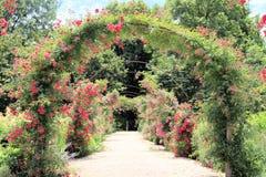 den ärke- trädgården steg Royaltyfri Foto