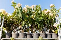Den åkerbruka trädgården shoppar, brukar lagret Blomkrukor växter fotografering för bildbyråer