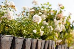 Den åkerbruka trädgården shoppar, brukar lagret Rosa blomkrukor, växter royaltyfri bild