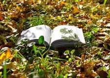 Den öppnade boken ligger på gräset i parkerar fotografering för bildbyråer