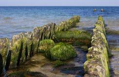Den Östersjön stranden Royaltyfri Bild