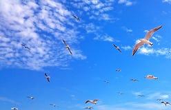 Den över huvudet flugan av seagulls arkivfoto