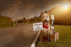 Den övergav hunden sitter bundet med resväskan på vägen arkivbilder