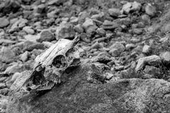 Den övergav skallen som ligger på, vaggar efter vintern Arkivbilder