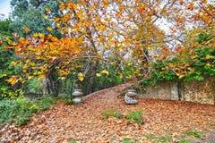 Den övergav trädgården av den Tatoi slotten Grekland royaltyfri fotografi
