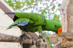 Macawfågel arkivbilder