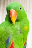 Macawfågel Royaltyfri Fotografi