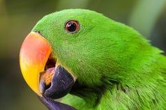 Macawfågel Royaltyfria Bilder