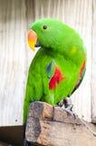 Macawfågel royaltyfri bild