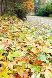 den abscissed hösten blad parkbanayellow Royaltyfria Bilder