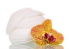 Den absorberande bröstblock och orkidén blommar på vit Arkivfoton